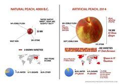 Ako sa za 10 000 rokov zmenili broskyne, melóny a kukurica… bit.ly/1upWwss