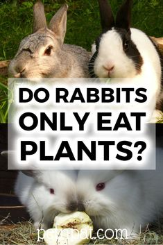 Is a rabbit a herbivore? Is there ever a time you can sneak your bunny a piece of bacon? Animals For Kids, Animals And Pets, Baby Animals, Funny Animals, Cute Animals, Rabbit Toys, Pet Rabbit, Animal Quotes, Animal Memes