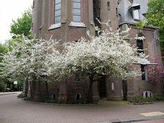 Spring Church........