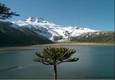 Berg und See Berg, Volcano, Mount Rainier, River, Mountains, Landscape, Nature, Naturaleza, Volcanoes