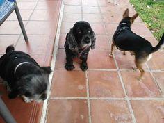 Ratos en casa 08/16 Thais, George y Richie