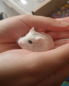 This delicate foof that wants to tell you a v important secret: | 16 Tiny Fluffs That Will Warm Even The Coldest Heart