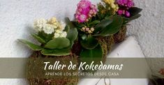 Aprende los secretos de esta técnica ancestral desde casa. Glass Vase, Plants, Home Decor, The Secret, Atelier, Create, Decoration Home, Room Decor, Plant