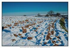 Winter #petermarbaise #tuxoche
