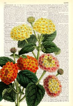 Lantanas bouquet printed on  Dictionary Page wall art home decor, wall hanging , flower wall art, Lantana  wall decor