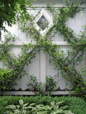 Chinese Star Jasmines on espalier wires with buxus and hostas - HEDGE Garden Design & Nursery Dream Garden, Garden Art, Home And Garden, White Gardens, Garden Structures, Garden Cottage, Garden Spaces, Garden Projects, Garden Inspiration