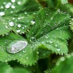 Img Plant Leaves, Photography, Plant, Photograph, Fotografie, Photoshoot, Fotografia