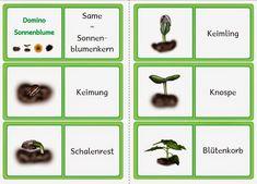 Lebenszyklus Huhn - Domino (k)   Lebenszyklus Huhn - Domino (ck)         Lebenszyklus Frosch - Domino         Lebenszyklus Hirschkäfer ...