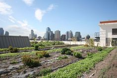 city farming in new york – Frau Meise