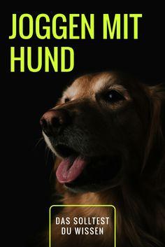 Hund und Auslastung: Joggen mit Hund - das solltest Du wissen!
