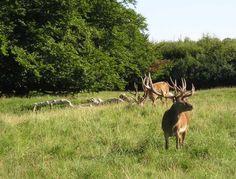 The Deer Park Lyngby Denmark