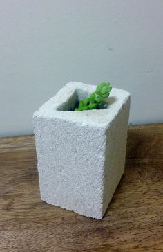 Succulent in Triangle in Square Hebel Stone pot I carved