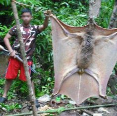 This would be a gliding creature. Probably a hoax...