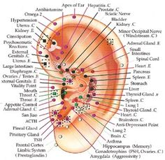 Auriculotherapy- accuprressure on the ears for weight loss and tons of other stuff. Great maps on this site