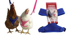 Crazy Stuff for Chickens...Chicken Harness - Redeem Your Ground | RYGblog.com