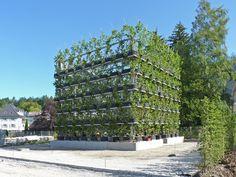 Baubotanik: Um sistema construtivo inspirado na botânica que cria estruturas vivas,Plane cube. Imagem © Ludwig.Schönle