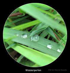 MW Art Marion Waschk, Gras, Acker, Landschaft, Spaziergang, Hagen, NRW, Wasser, Wasserperlen, Raureif, Grün, Grashalm, Tropfen, Foto, Fotbearbeitung,