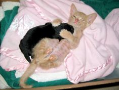 <b>These are all the cuddles you need to know.</b> Snug Life