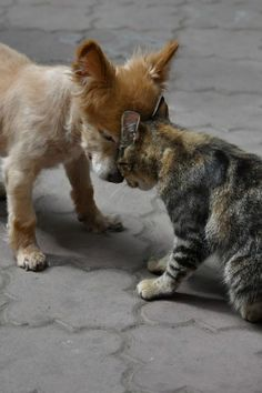 Hug between dog and cat best friends