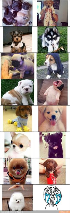 I have introduced my daughter & nieces to Pinterest.  Sorry for flooding the wall with puppies & repeats. lol