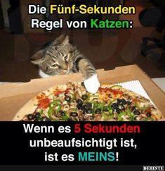 Die Fünf-Sekunden Regeln von Katzen.. | DEBESTE.de, Lustige Bilder, Sprüche, Witze und Videos...http://gotourl.de/Do55iXI7292ajsd