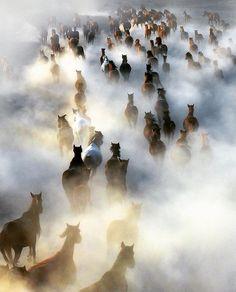WEBSTA @earthpix Wild horses  Turkey, ⠀ Photo by @nuricorbacioglu