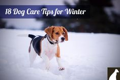 18 Dog Care Tips for Winter - http://go.homesalive.ca/blog/bid/325345/18-Dog-Care-Tips-for-Winter