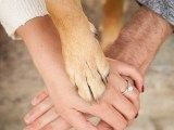 engagement ring and dog paw. hands and paw. dog paw. dog in engagement pictures. engagement photography. dog photography