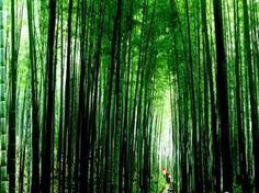 Chishui Zhuhai National Forest Park, Chishui City, Guizhou