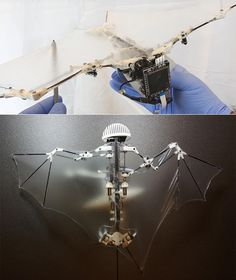 "Researchers at CalTech have developed a ""Bat Robot"" that boasts 40 active and passive joints, enabling it to fly just like the real thing. It demonstrates one of the most advanced designs to date of a self-contained flapping-winged aerial robot with bat morphology that is able to perform autonomous flight."