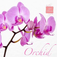 """""""Orchid is a symbol of the exotic beauty. It symbolises refinement, thoughtfulness and mature charm. It also symbolises proud and glorious femininity.…"""""""