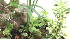 La composición está inspirada en la primavera de los bosques de América tropical. Para la composición se utilizó una chamaedorea Elegans como planta principal y acompañando a la misma una Fitonia y un Ficus Pumila para dar esa sensación de color y de flora abundante. Como plantas secundarias tenemos la planta verde y un brote de nuestra nueva planta verde y blanca. En el suelo tenemos musgo tapizante acompañado con cortezas y piedras emulando el suelo tropical de esta zona tan tropical.