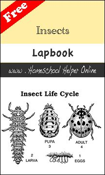 Free Insects Lapbook - Homeschool Helper