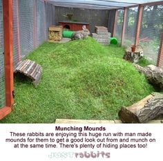 DIY Pets : This run with its grassy mounds and tunnels is a great space for keeping bunnies exercised and stimulated. Plenty of hiding places too! Rabbit Cages, Bunny Cages, House Rabbit, Meat Rabbits, Raising Rabbits, Rabbit Habitat, Rabbit Enclosure, Reptile Enclosure, Bunny Hutch
