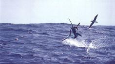 Costa Rica Fishing Report Reveals Marlin, Sailfish and Mahi Mahi Increases http://gocostaricafishing.com/news/view/263/Costa_Rica_Fishing_Report_Reveals_Marlin__Sailfish_and_Mahi_Mahi_Increases.html?source=pi