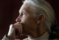 """Last Friday in a sold-out event in Salt Lake City, primatologist Jane Goodall was speaking about her work and the future of chimpanzees when she shared her opinion on a more controversial topic: genetically modified organisms (GMO's). Goodall appeared with Steven Druker, author of the book """"Altered"""