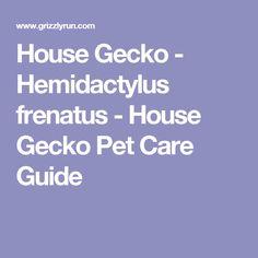 House Gecko - Hemidactylus frenatus - House Gecko Pet Care Guide