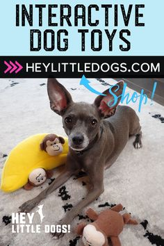 Keep your pup's mind active and entertained with these fun puzzle toys. Options include fun treat balls and adorable puzzle toys. Cute Dog Toys, Small Dog Toys, Cute Dog Clothes, Best Dog Toys, Cute Dogs, Stimulating Dog Toys, Outdoor Dog Toys, Tough Dog Toys, Durable Dog Toys