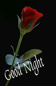 Good Night I Love You, Romantic Good Night, Good Morning Beautiful Images, Good Night Love Images, Good Night Prayer, Good Night Blessings, Good Night Gif, Sweet Night, Good Night Sweet Dreams