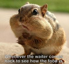 Every time the waiter comes back...