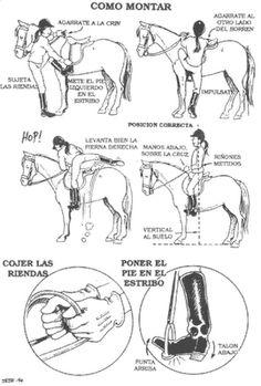Conoce sobre Caballos: Esquemas de como tratar un caballo