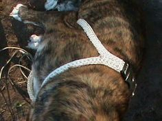 DIY Crochet Dog Harness: 5 Steps (with Pictures) Dog Harness, Dog Leash, Diy Crochet Halter Top, Crochet 101, Dog Fails, Flea Treatment, Puppy Face, Dog Coats, Dog Accessories