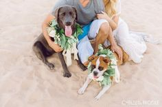 E-shoot with the pups! This couple brought their dogs along for their engagement shoot at the lake. #lakemead #lasvegas #beach #engagementsession #layersoflovely