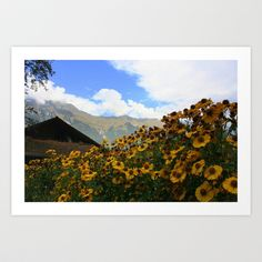 Daisies and Alps Art Print by Kim Ramage - $16.64