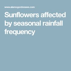 Sunflowers affected by seasonal rainfall frequency
