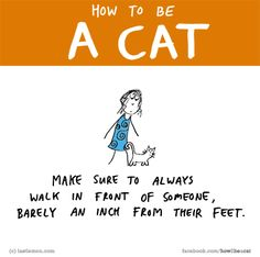 What is it about your cat that makes you smile? Let us know here http://lastlemon.com/cat_submit/ and we'll illustrate it.
