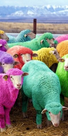 Now that's how you dye your own yarn!
