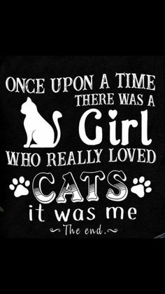 New funny cats pics kittens mom 39 ideas Crazy Cat Lady, Crazy Cats, Kitten Quotes, Cat People, All About Cats, Animal Quotes, Cat Life, Cat Memes, I Love Cats