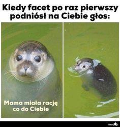 Wtf Funny, Funny Cute, Geek Meme, Funny Lyrics, Polish Memes, Best Memes Ever, Weekend Humor, Funny Mems, Funny Cat Pictures