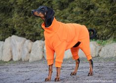 Check Our Ohio Fleece Dog Suit designed by Euro Dog Designs. Perfect for layering underneath a winter coat when it's really cold, or to use on it's own when it's just a bit chilly. Dog Body Language, Dog Suit, Dog Fleece, Pet Fashion, Dog Wear, Outdoor Dog, Dog Dresses, Homemade Dog, Dog Coats